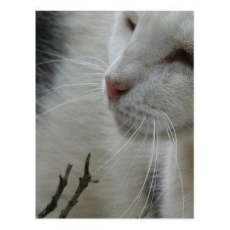 Carte Postale Fermez-vous d'un chat pie