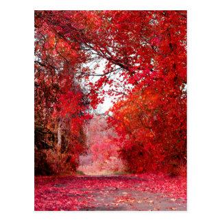 Carte Postale Feuille de feuille de douche de Forest Park de