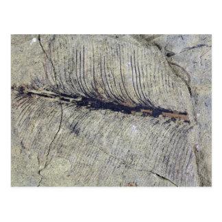 Carte Postale Feuille fossile fragile de plante