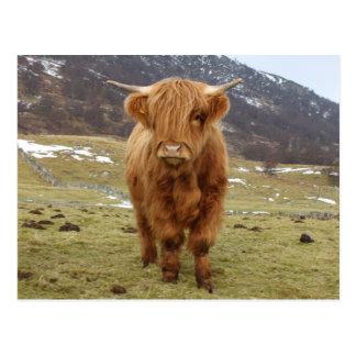Carte Postale Fier d'être écossais !