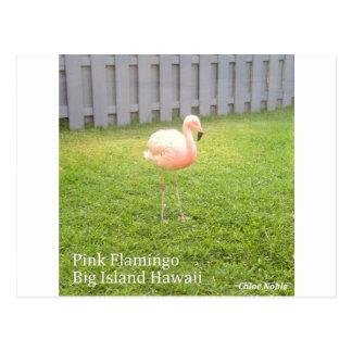 Carte Postale Flamant rose - grande île Hawaï