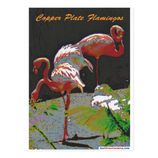 Carte Postale Flamants de plat de cuivre