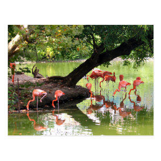 Carte Postale Flamants roses 7124
