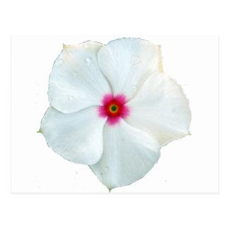 Carte Postale fleur blanche
