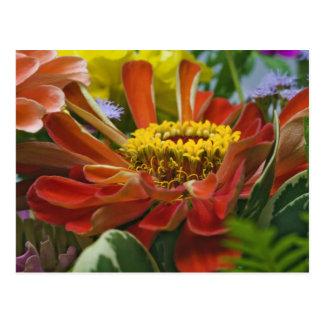 Carte Postale Fleur de chrysanthème