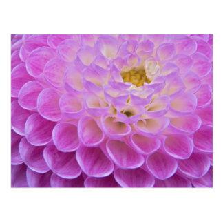 Carte Postale Fleur de chrysanthème décorant le site grave