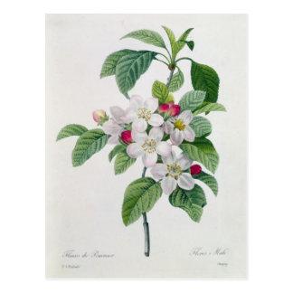 Carte Postale Fleur, de 'DES de Les Choix plus des belles