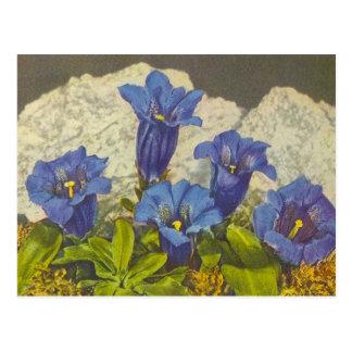Carte Postale Fleur de gentiane