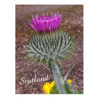 Carte Postale Fleur de l'Ecosse, le chardon