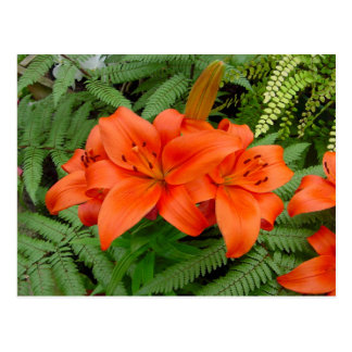 Carte Postale Fleur de lis - orange iridescente (Matt 28-30)