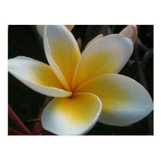 Carte Postale fleur de Thaïlande