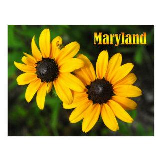 Carte Postale Fleur d'état du Maryland : Susan Noir-eyed