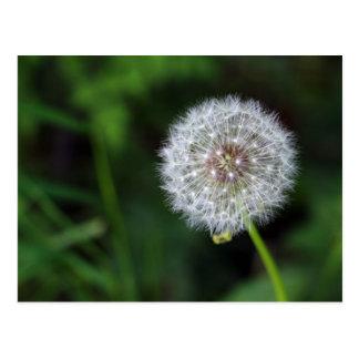 Carte Postale Fleur d'haleine