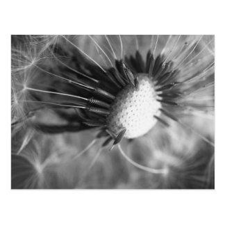 Carte Postale Fleur d'haleine 2013 5