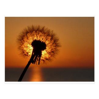 Carte Postale Fleur d'haleine/Dandelion