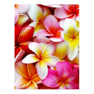 Carte Postale Fleur d'Hawaï de Frangipani de Plumeria customisée