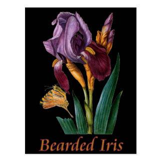 Carte Postale Fleur d'iris barbu