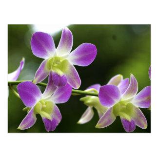 Carte Postale Fleur d'orchidées de Trorpical