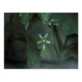 Carte postale Fleur / Flower