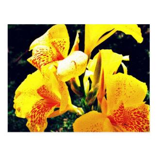 Carte Postale Fleur jaune