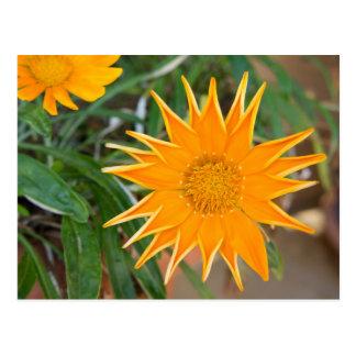 Carte Postale fleur jaune/yellow flower