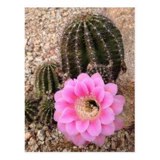 Carte Postale Fleur rose de cactus