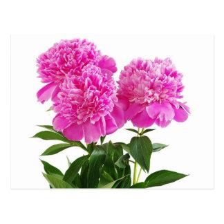 Carte Postale Fleur rose florale de pivoine - Merci, bonjour