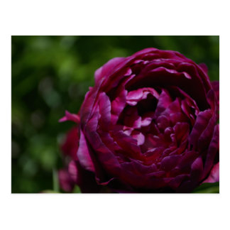 Carte Postale Fleur, rouge