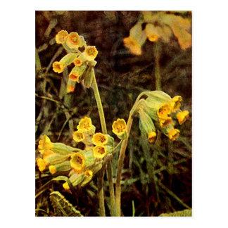 Carte Postale Fleur sauvage : Primevère