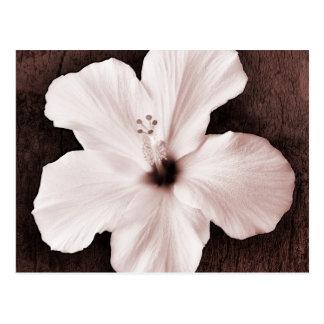 Carte Postale Fleur tropicale de sépia hawaïenne blanche de