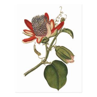 Carte Postale Fleur vintage de passion