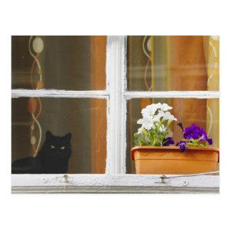 Carte Postale Fleurissez par la fenêtre, Sighisoara, Roumanie