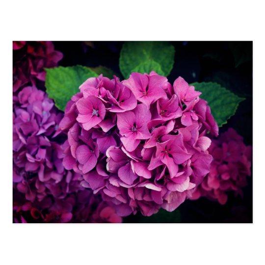 Carte postale Fleurs