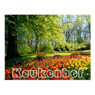 Carte Postale Fleurs à Keukenhof, à arbres et à tulipes