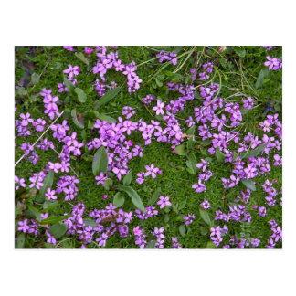 Carte Postale Fleurs alpines