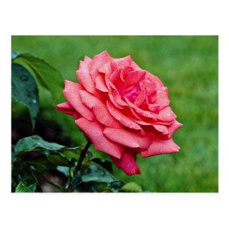 """Carte Postale Fleurs blanches hybrides """"de nuage parfumé"""" de"""