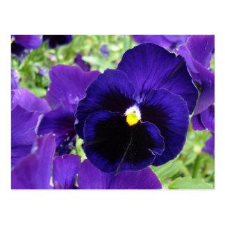 """Carte postale """"fleurs bleu-foncé """" de photo"""