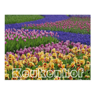 Carte Postale Fleurs chez Keukenhof, courants des tulipes