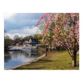Carte Postale Fleurs de cerisier, rangée de Boathouse,