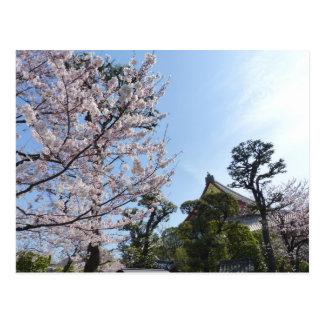 Carte Postale Fleurs de cerisier Sakura de Tokyo