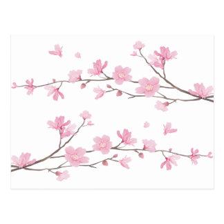 Carte Postale Fleurs de cerisier - Transparent-Arrière - plan