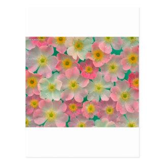 Carte Postale Fleurs de couleur en pastel