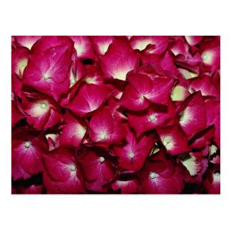 Carte Postale Fleurs de delphinium