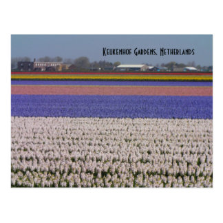 Carte Postale Fleurs de Pays-Bas