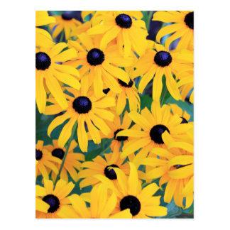 Carte Postale Fleurs de Susan observées par noir dans