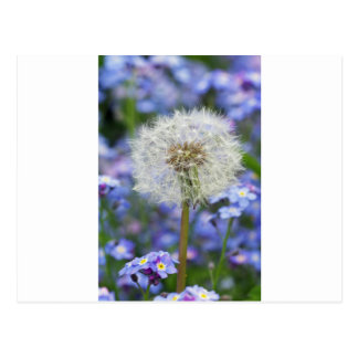 Carte Postale Fleurs d'haleine rêve dans les floraisons pas mes
