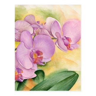 Carte Postale Fleurs d'orchidée de Phalaenopsis - multi