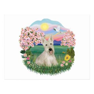 Carte Postale Fleurs - écossais blonds comme les blés Terrier