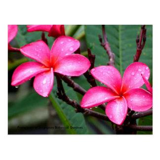 Carte Postale Fleurs exotiques, Frangipani à Singapour