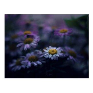 Carte postale Fleurs / Flowers